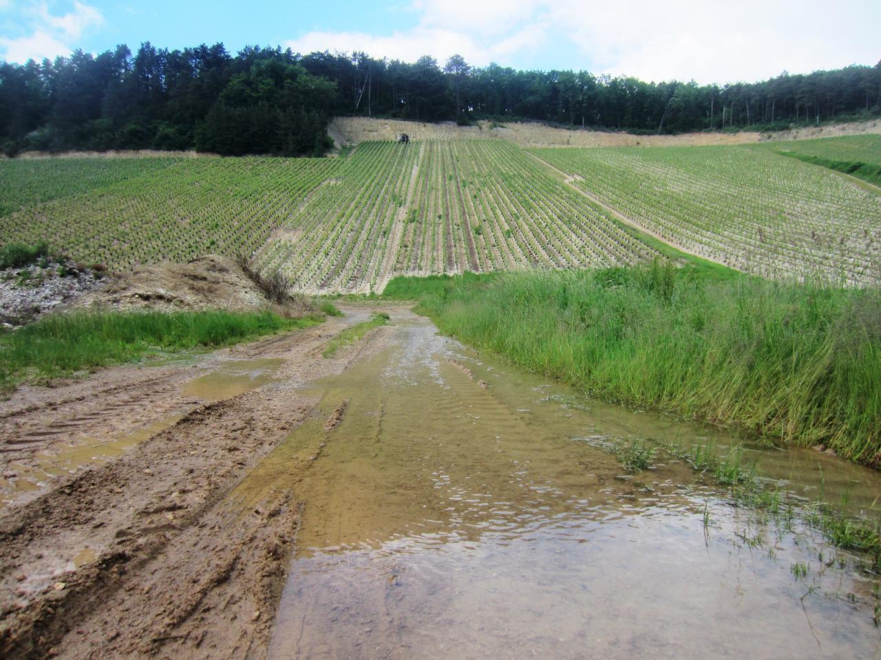 La parcelle dite du Bouillon, avec toute la pluie, les sources rejaillissent de terre